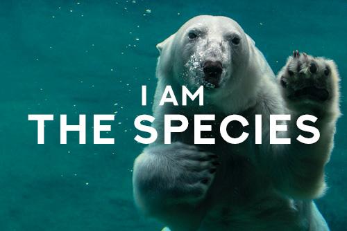 I am the animals Free Spirit