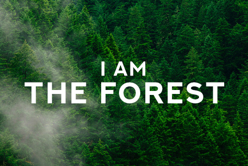 I am the forest Free Spirit
